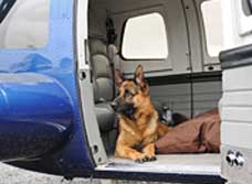 PersonalProtectiondogleavesusinhelicopter